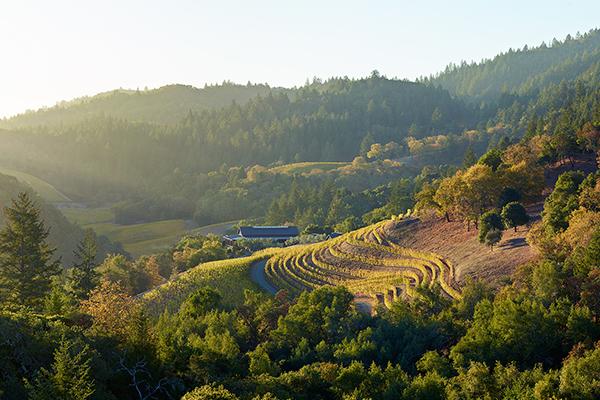 Image feauturing Futo vineyard
